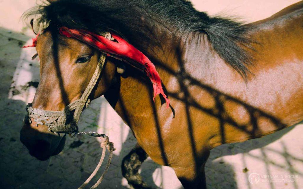 Hamong Horse