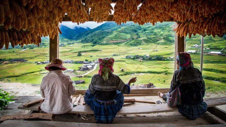 Northern Vietnam - The Golden Harvest @ Mu-Cang-Chai