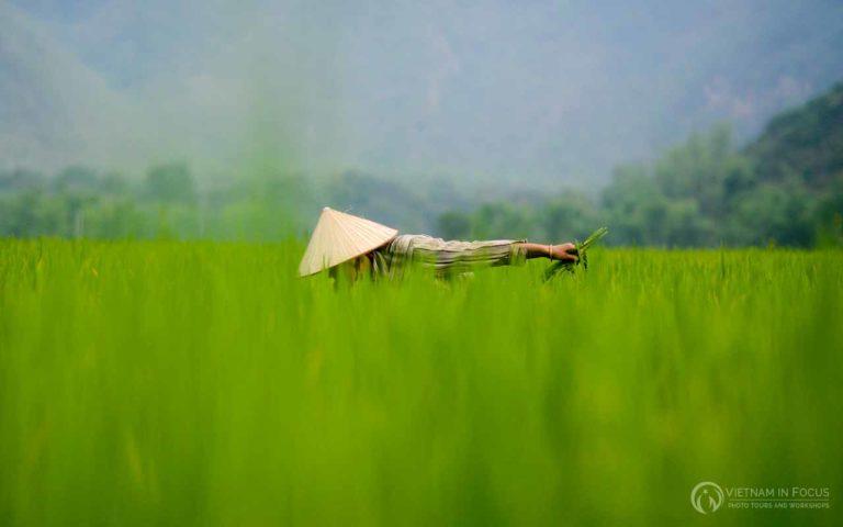 Northern Vietnam 17