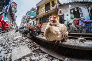 Vietnam in Focus - Nat Geo trip